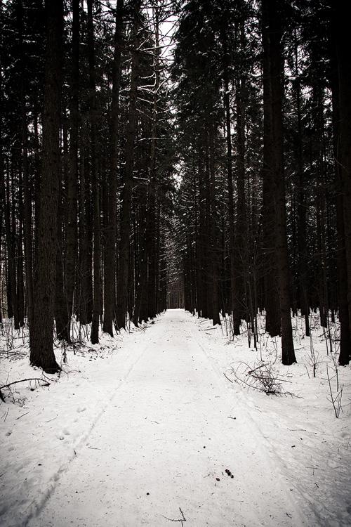 dielichtfanger-Winterwald-01