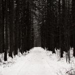 die lichtfänger Lichtfang Winterwald
